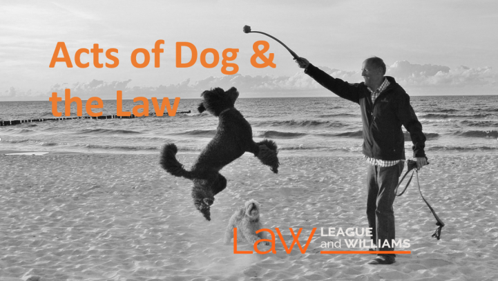 Acts of Dog & the Law in BC: Risk & Responsibility