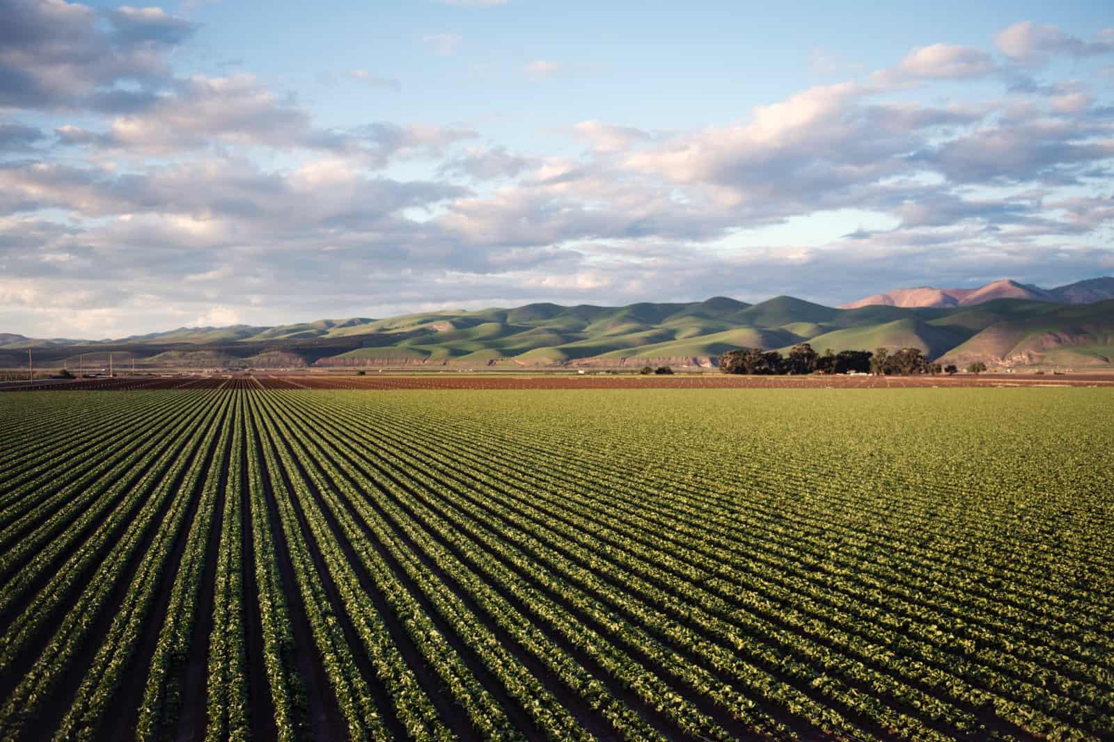 Green-farm-crops
